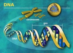 Język angielski w inżynierii genetycznej