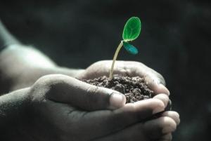 Język angielski w produkcji roślinnej
