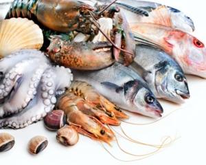 Język angielski w przetwórstwie ryb i owoców morza rybołówstwo