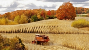 angielski w rolnictwie